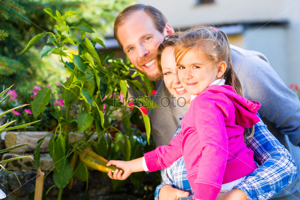 Family in garden harvesting bell pepper