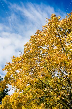 Tree in autumn or fall