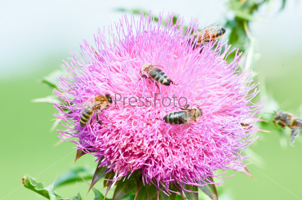 Пчелы на цветах в горах