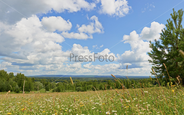 solar field grasses ....