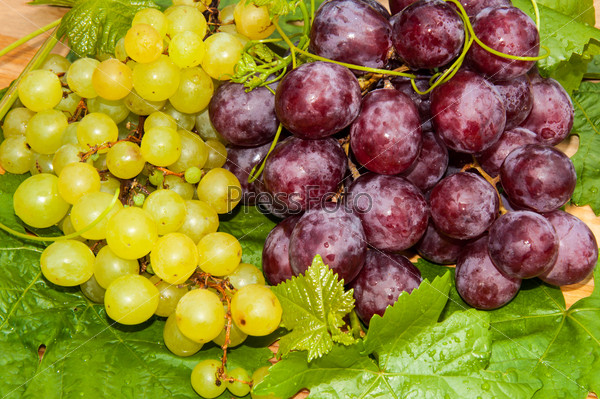 Bunch of grapes,