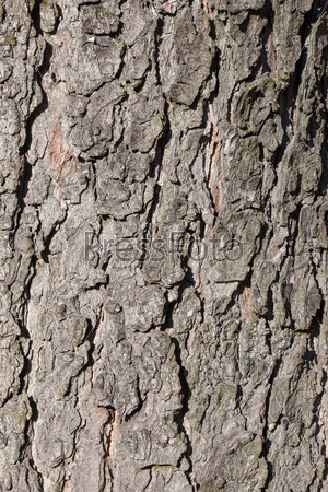 background of tree bark