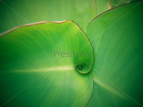 Зеленые листья экзотического растения.