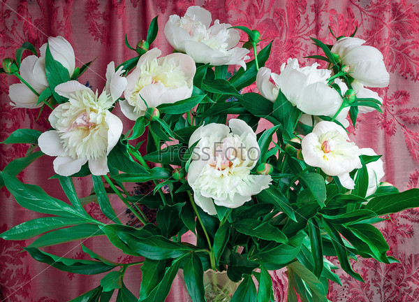 Bouquet of white peonies on a beautiful background.