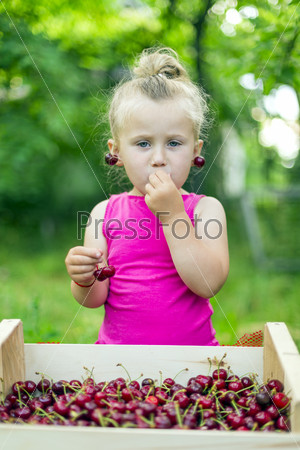 child eating cherries