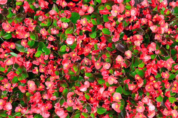 Blossoming flowerbeds background