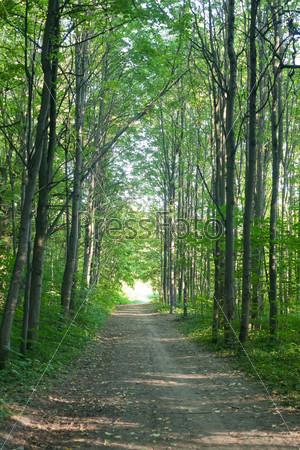 Дорожка в летнем лесу