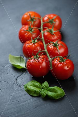 Ветка томатов и базилик