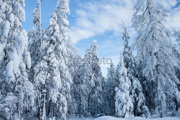 Зимний eральский пейзаж
