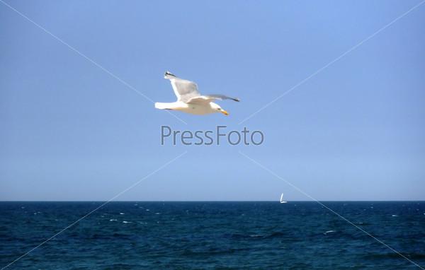 Little bird in the blue sky