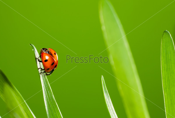close up of beautiful ladybug