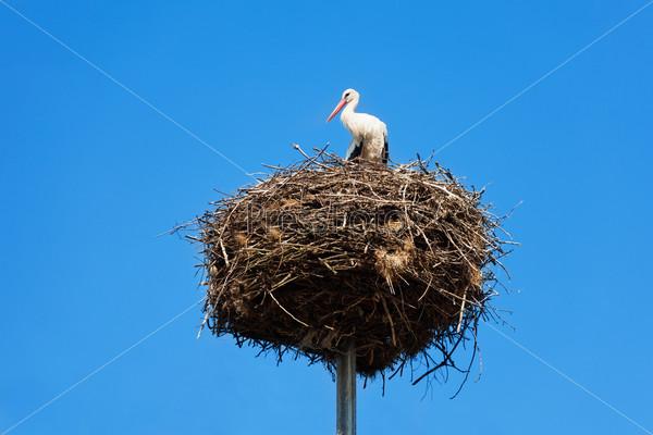 Stork bird's nest on column