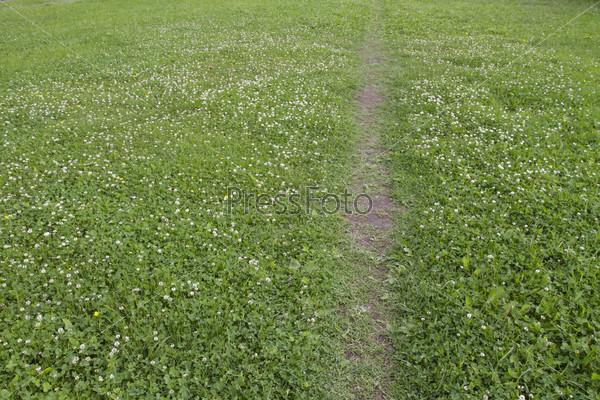 Тропа в поле с кашками