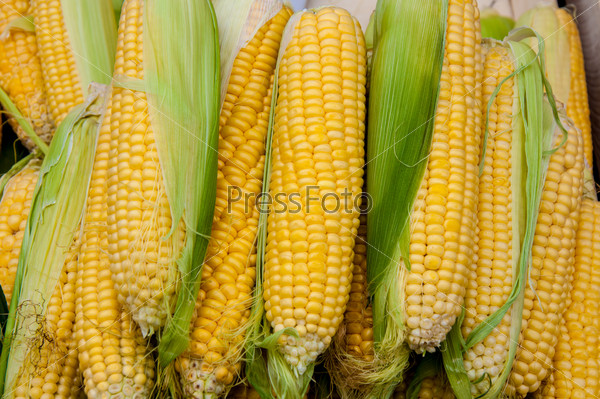 Corn is on sale at the Bazaar
