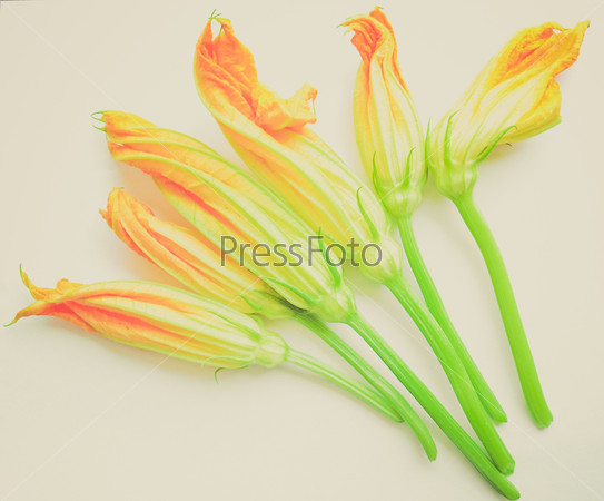 Retro look Courgette Zucchini flowers