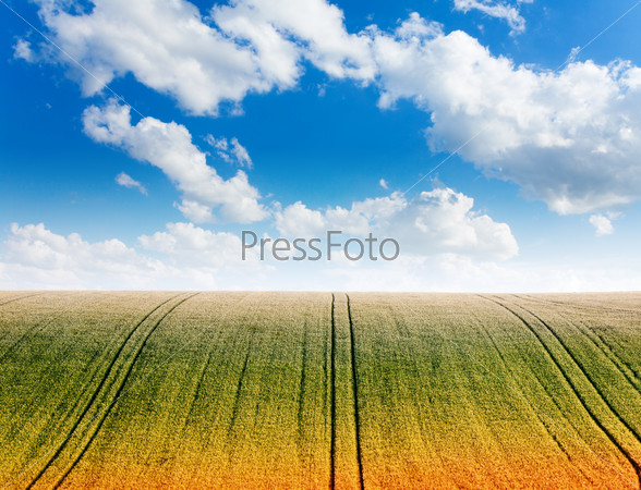 Wavy field with cloudy sky and horizon