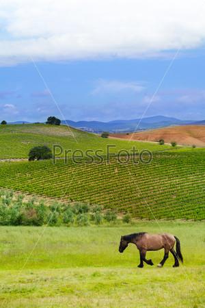 House in highland of Tuscany landscape, Italy