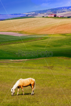 Beautiful horse eating grass in the meadow