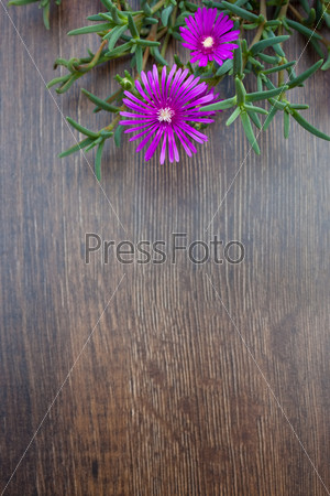 Lampranthus (Ice Plant) flowers on wood background