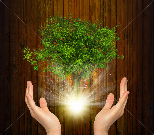 Hands hold magical green tree and rays of light