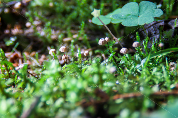 Fungi colony growing from moss