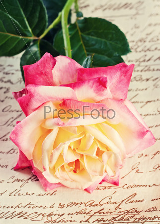 single  rose on on fabric background