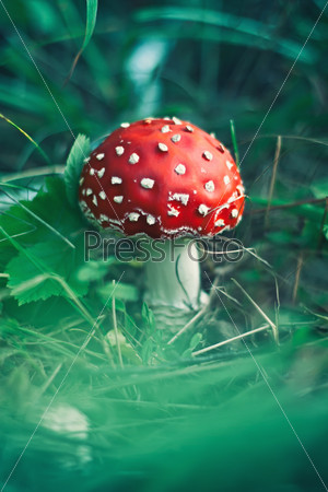 red stipe mushroom on the forest