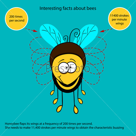 Interesting fact about bees