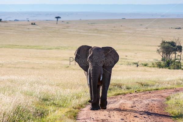 Слон изображение 4