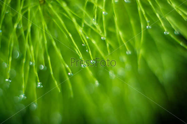 Drops of dew.