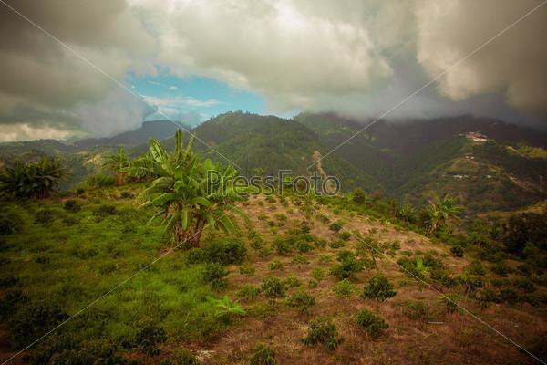 Кофейная плантация Блю Маунтин, Ямайка