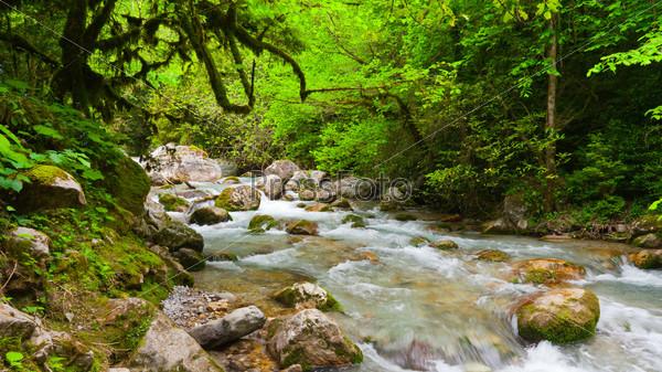 Горная река в красивом лесу