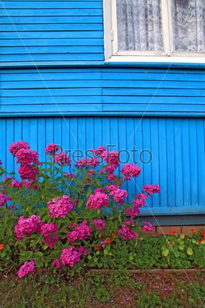 Цветы возле деревянного здания