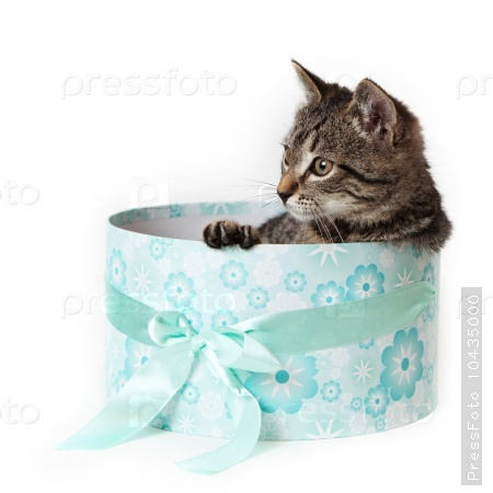 Striped kitten with yellow eyes peeking out from blue gift box