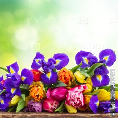 spring tulips and irises