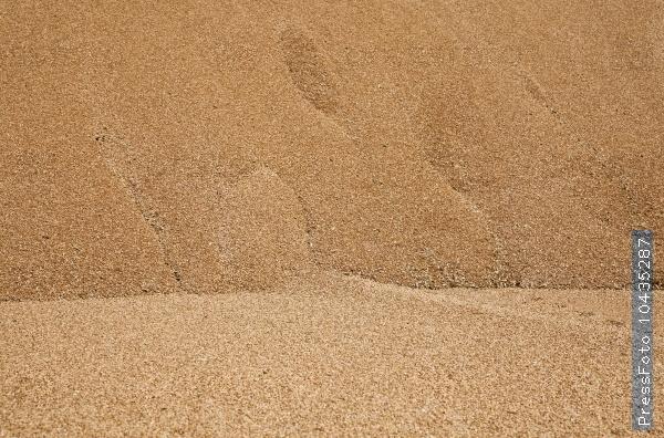 wheat crop. grain