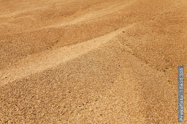 heap of wheat grains