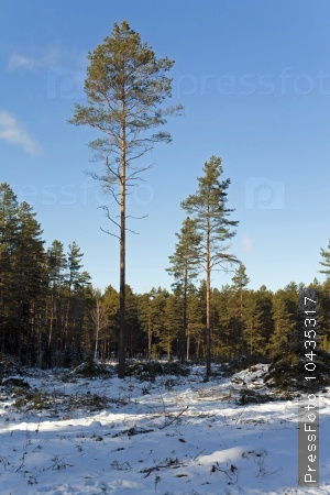 deforestation in the winter