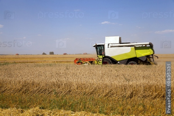 agricultural field. cereals