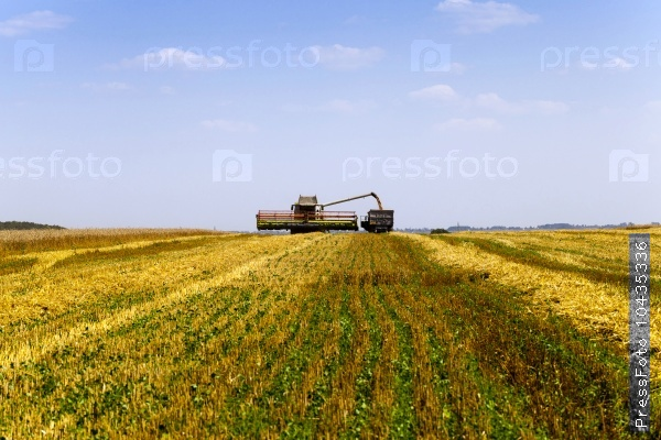 harvesting . agricultural field.