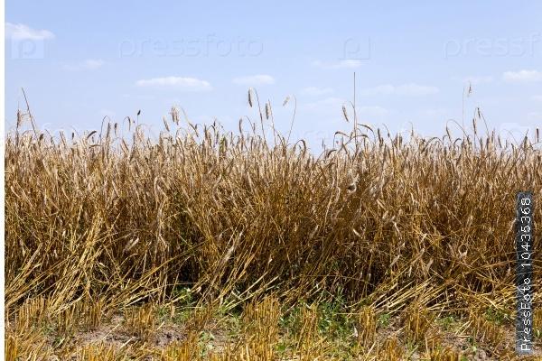 agriculture.  harvest. summer