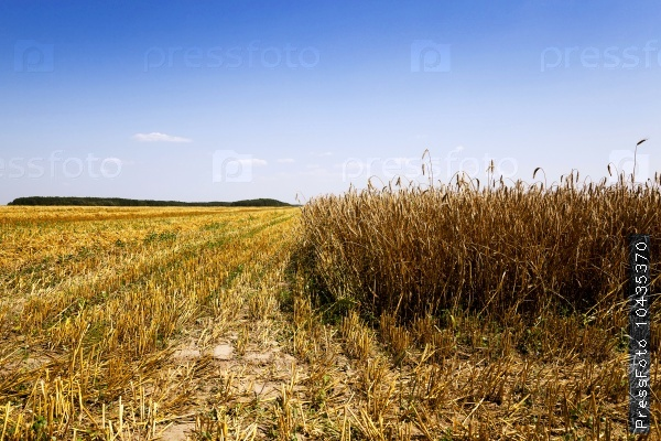 cereals during harvest
