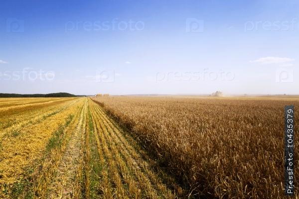 harvest of cereals