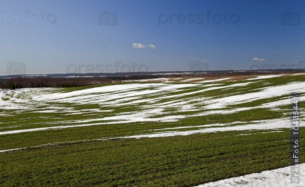 winter wheat crops in early spring