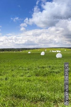 harvesting grass hay