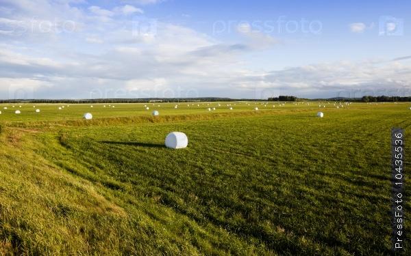 harvesting grass   in cellophane