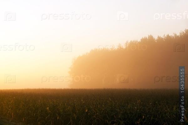 dawn sun , orange light