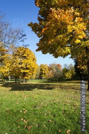 autumn forest. Belarus
