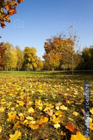 autumn season .  trees