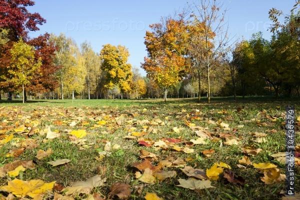 autumn forest . park